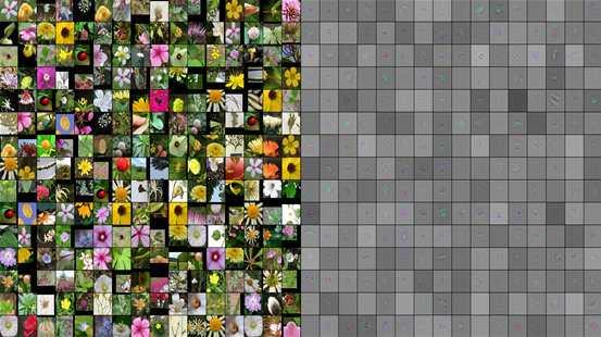 Microsoft Flower Recognition System Matrix